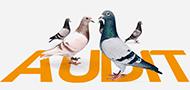 Audit SEO : piège à pigeons